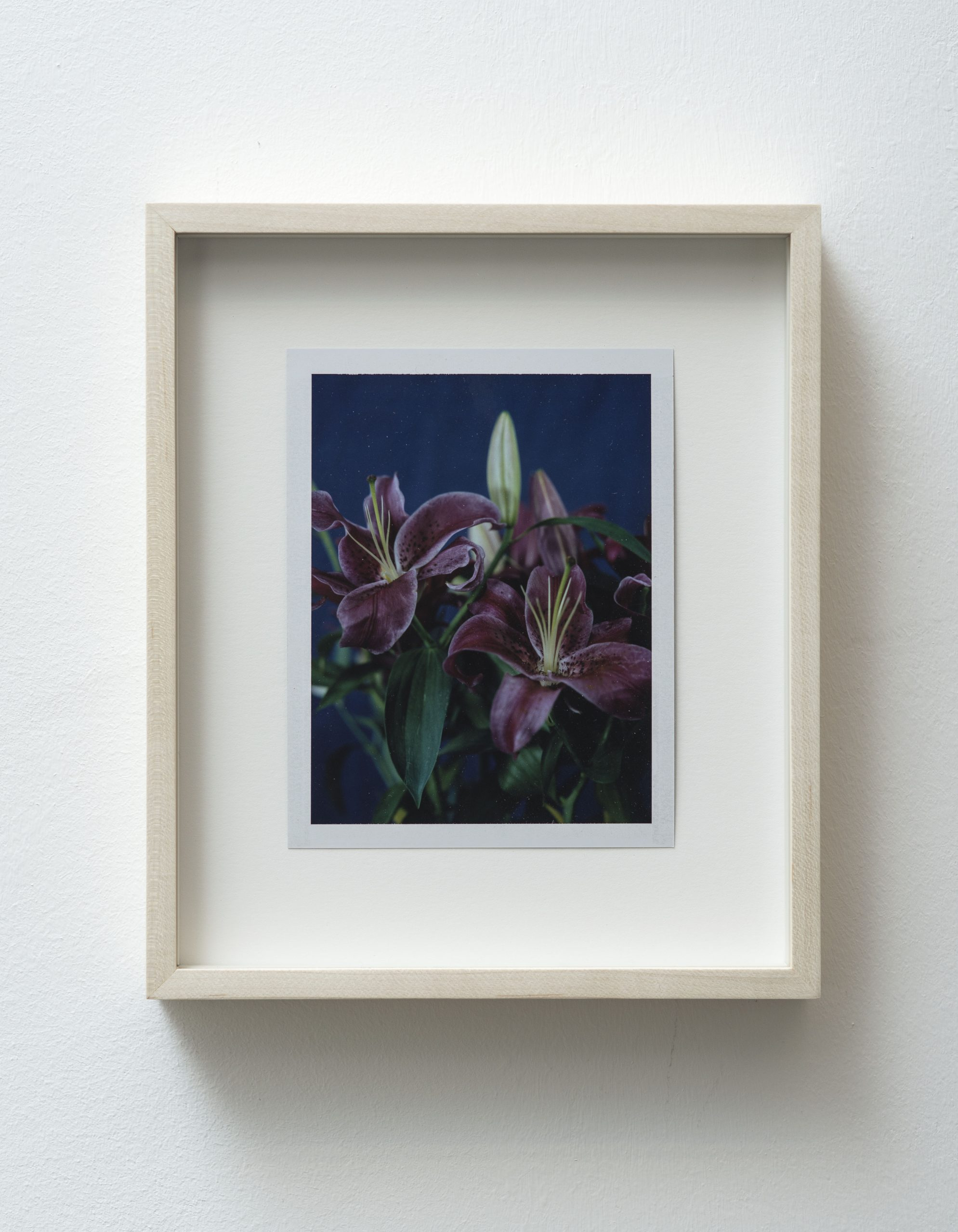 Sam Falls Untitled (Life and death, asiatic lilies), 2014 (dittico, dettaglio)